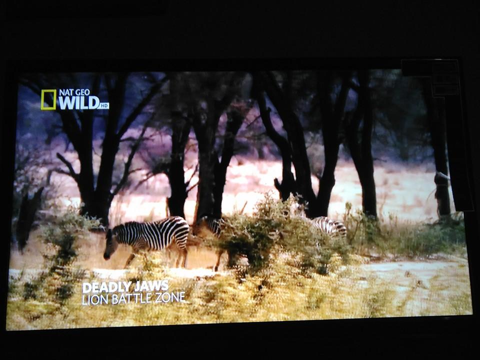 Good news doston Dish tv HD now on CLine wow - Golden Multimedia Forum